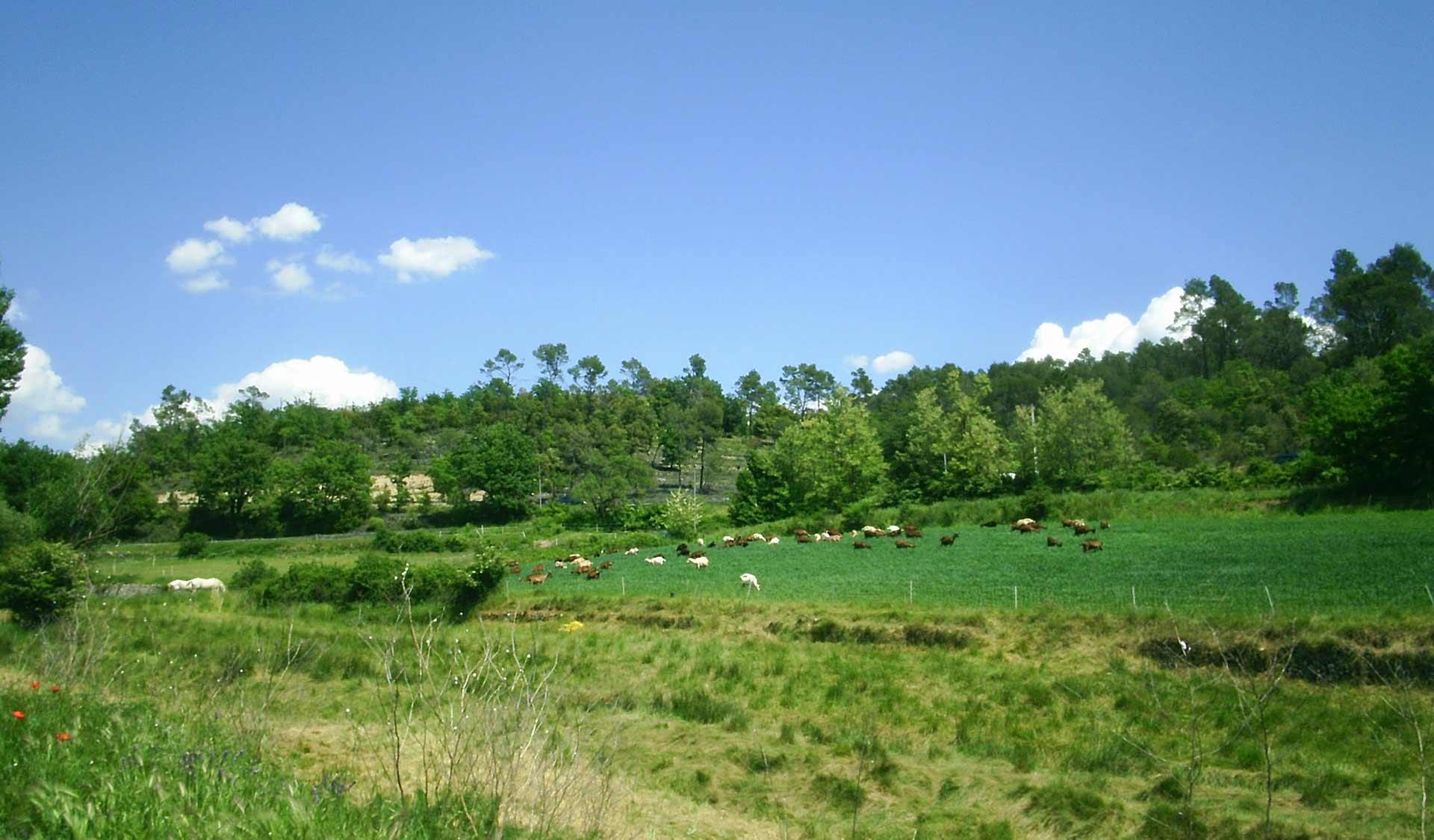 fromagerie-saint-jaume-troupeau